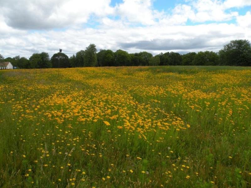 PollinatorHabitat-NRCS